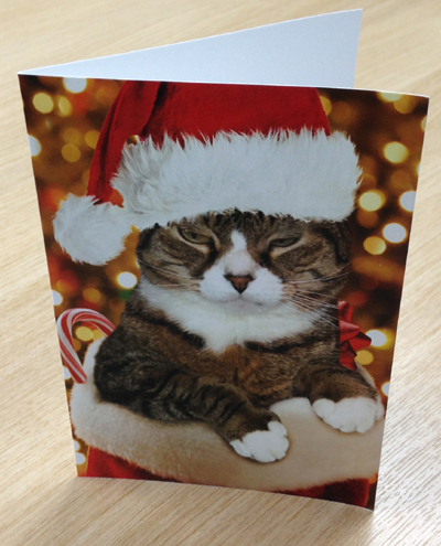 Grouchy Christmas Cat